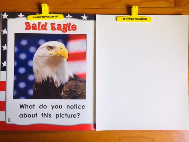 bald eagle blank