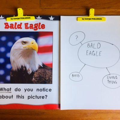 bald eagle question